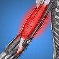 da má postura à assadura, evita a ligadura