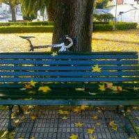 """""""o Outono é uma segunda Primavera em que cada folha é uma flor""""..."""