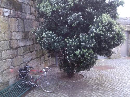 Bicicletário Sea Life