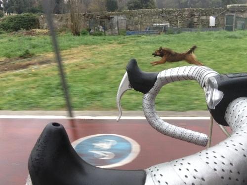 rafeiro vs ciclista 5