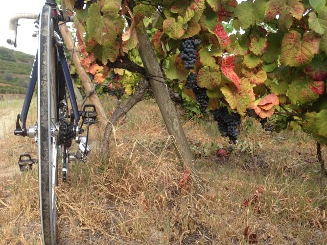 ciclo da vinha 4